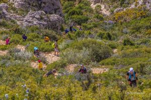 870-Trail de Mimet 2014 (5)